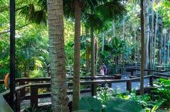 Städtischer Dschungel in Südufer in Brisbane, Australien stockfotos
