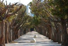 Städtischer Forest Alley Cement And Nature Stockfotos