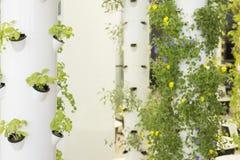 Städtischer Garten Stockbilder