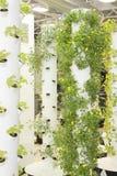 Städtischer Garten Lizenzfreies Stockfoto
