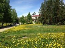 Städtischer grüner Rasen mit gelbem Löwenzahn Stockbild