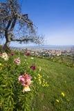 Städtischer Park im Frühjahr Lizenzfreie Stockfotos