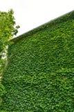 Städtisches Haus mit grünen Wänden lizenzfreies stockfoto