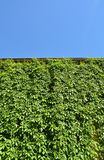Städtisches Haus mit grünen Wänden Lizenzfreie Stockfotografie