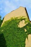 Städtisches Haus mit grünen Wänden Stockfoto
