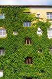 Städtisches Haus mit grünen Wänden stockbilder