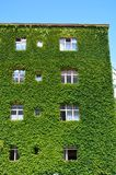 Städtisches Haus mit grünen Wänden Stockfotografie