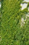 Städtisches Haus mit grünen Wänden Lizenzfreies Stockbild