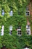 Städtisches Haus mit grünen Wänden lizenzfreie stockbilder