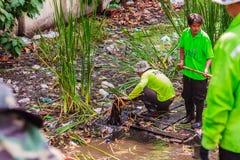 Städtisches Personal Bangkoks in der ausbaggernden Arbeit des Kanals, zum von vegetatio zu entleeren Stockbilder