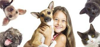 Ställ in att hålla ögonen på för husdjur Arkivbild