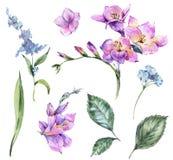 Ställ in av blom- beståndsdelar för vattenfärgtappning som blommar freesia och G stock illustrationer