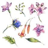 Ställ in av blom- beståndsdelar för vattenfärgvildblommor, vattenfärgtistlar, rosa blommor vektor illustrationer