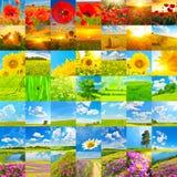 Ställ in av blommor, gröna fält i vår och höstackar arkivfoto