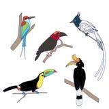 Ställ in av de exotiska fåglarna som står på trädet vektor illustrationer