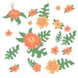 Ställ in av det hawaianska blomma- och monsterasidanaturbladet vektor illustrationer