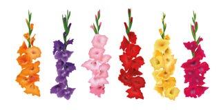 Ställ in av Gladioluses, blommor för svärdlilja också vektor för coreldrawillustration gult rött, rosa, purpurfärgat royaltyfri illustrationer