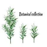 Ställ in av gröna filialer på en vit bakgrund royaltyfri illustrationer