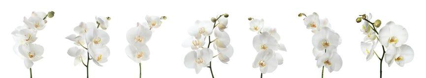 Ställ in av härliga orkidéphalaenopsisblommor royaltyfri fotografi