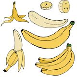 Ställ in av hand-drog enkla kulöra bananer vektor illustrationer