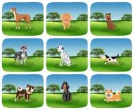 Ställ in av hundaveln i natur royaltyfri illustrationer
