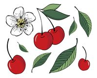 Ställ in av illustrationer av körsbär och sidor som isoleras på vit bakgrund royaltyfri illustrationer