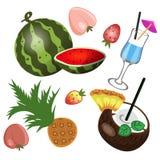 Ställ in av isolerad organisk tropisk produktvektorbild vektor illustrationer