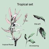 Ställ in av konturvektorblommor Den drog handen förgrena sig och sidor av tropiska växter Monokrom blom- modell Heliconia psittac vektor illustrationer