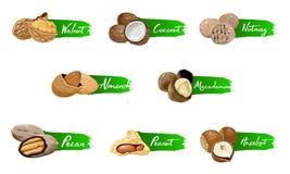 Ställ in av namngav symbolsmuttrar Fastställda vektoretiketter för logo med valnöten, kokosnöt, muskotnöt, hasselnöt, pecannöt, m stock illustrationer