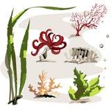 Ställ in av olika havsväxter vektor illustrationer