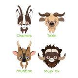 Ställ in av olika herbivor med horn vektor illustrationer