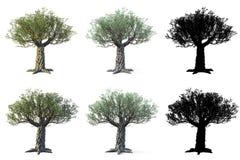 Ställ in av olivträd som isoleras på vit bakgrund med maskeringar stock illustrationer