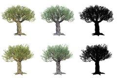 Ställ in av olivträd som isoleras på vit bakgrund med maskeringar royaltyfri illustrationer