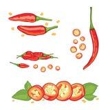 Ställ in av peppar för den röda chili med skivat på vit bakgrund stock illustrationer