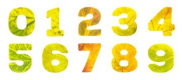 Ställ in av siffror som snidas av höstsidor stock illustrationer