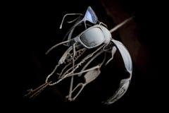 Ställ in av solglasögon gammalt och dammigt vid ett rep, beskådat underifrån arkivbild