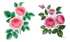 Ställ in av två filialer som isoleras på vit vektor illustrationer