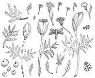 Ställ in av utdragna svartvita blommor för handen Tulpan, sidor och örter Beståndsdelar för design som scrapbooking ?versikt royaltyfri illustrationer