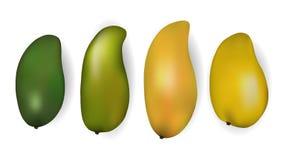 Ställ in av vektorillustrationer av mango vektor illustrationer
