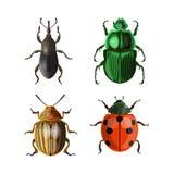 Ställ in av vektorskalbaggar royaltyfri illustrationer