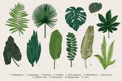 Ställ in bladet exotics royaltyfri illustrationer