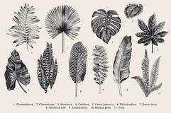 Ställ in bladet exotics Botanisk illustration för tappningvektor stock illustrationer