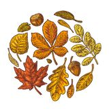 Ställ in bladet och ekollonen Färgrik inristad illustration för vektortappning stock illustrationer
