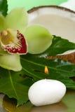 ställ in brunnsorten tropisk Royaltyfria Bilder