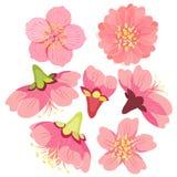 Ställ in den japanska körsbäret en kines också vektor för coreldrawillustration Arkivbild