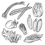 ställ in grönsaker Arkivfoto