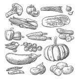 ställ in grönsaker Gurkor, vitlök, havre, peppar, broccoli, potatis och tomat stock illustrationer