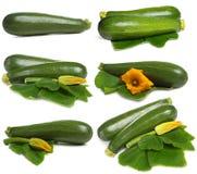 ställ in grönsakzucchinien Arkivfoton