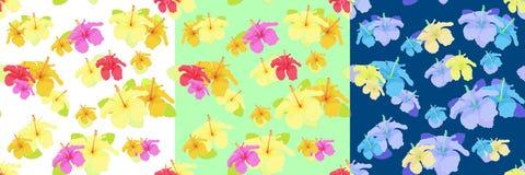 Ställ in hibiskusblommagräsplan, blått Sömlös vektorillustration Royaltyfri Foto
