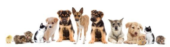 Ställ in husdjur arkivbild